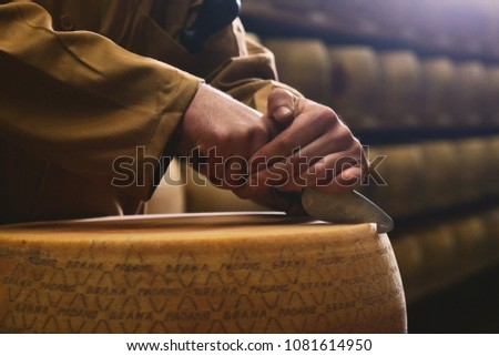 A cheesemaker controls the seasoning of the Parmesan cheese, which has to age for several months, opening a cheese form in half. The processing is done following the ancient Italian tradition.