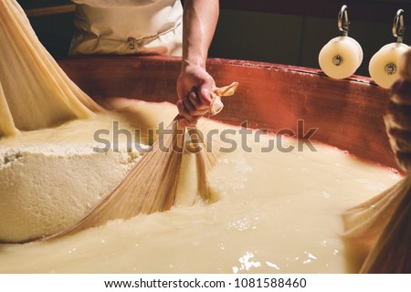 A cheesemaker prepares a form of Parmesan cheese using fresh and bio  milk. The processing is done following the ancient Italian tradition.