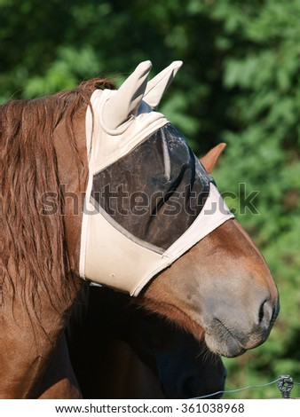 A chestnut horse wearing a protective fly mask. #361038968