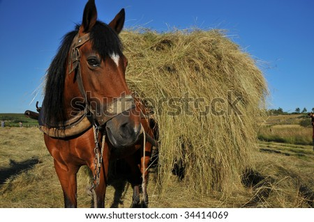 a chestnut mule harnessed to a traditional hay cart