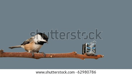 A chickadee finds a shiny present left on a branch for him at Christmas time with copy space. - stock photo