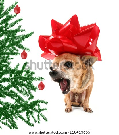 a chihuahua dressed up in a christmas bow