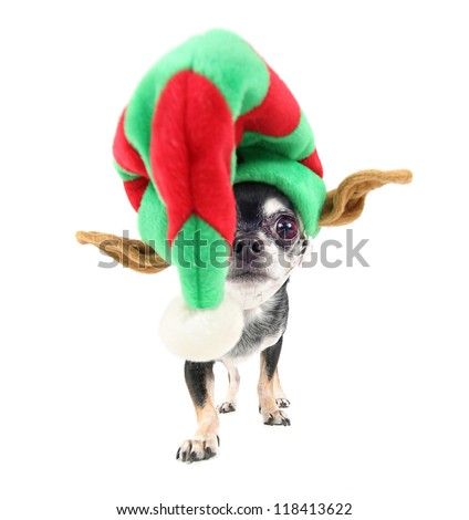 a chihuahua dressed up in a christmas santa claus hat