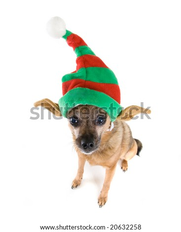 a chihuahua mix dressed up as an elf