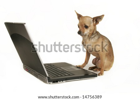 a chihuahua sitting in front of a computer