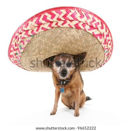 a chihuahua wearing a spanish sombrero