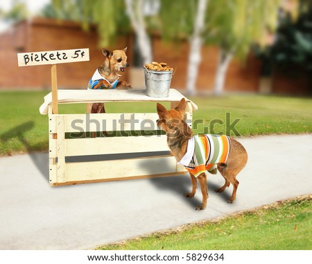 a chihuahua with a biscuit stand