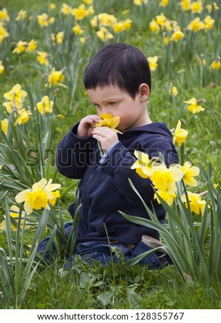 A child boy sitting amongst daffodil flowers in a spring  garden or in a park and smelling a daffodil.