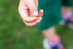 A child holding a grasshopper.