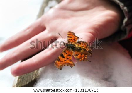 A child holds a frozen butterfly and warms it; waiting for warm; Bright butterfly on the white snow. Winter and summer symbols on the one picture; Nature miracle; Springtime is coming