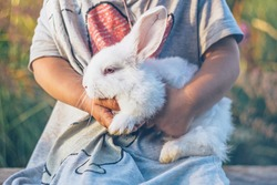 A child holds a white rabbit in his arms.Cute little rabbit.Petting zoo.Children and animals