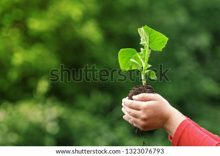 A child holds a young plant in hands against the background of spring green color. The concept of ecology, nature, care #1323076793