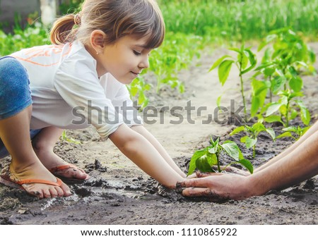 A child plants a plant in the garden. Selective focus.