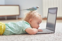 A child with a parrot on his head watches cartoons on a laptop or studies online. The concept of self-isolation in the coronavirus pandemic.