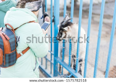 A child with a phone takes off a goat.A child with a phone takes off a goat