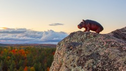 A children's toy hippopotamus is placed facing outwards on the rocky edge of a cliff overlooking a forest in autumn. The plastic hippo is seen against an evening sky with clouds low on the horizon.