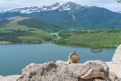 A chipmunk with full cheeks overlooking lake and the Colorado Rocky Mountains
