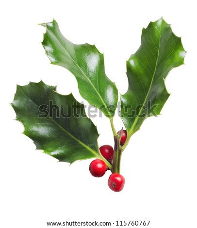 A Christmas cut-out.  Sprig of three holly leaves with red berries, isolated on white background.