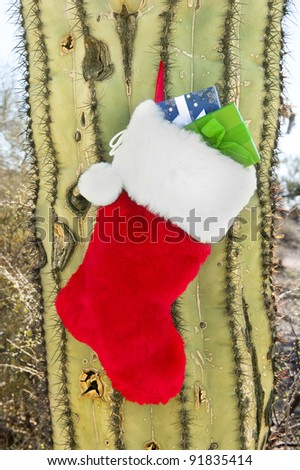 A Christmas holiday stocking stuffed with presents hanging on a cactus in the southwest.