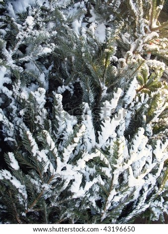 A christmas tree with white snow