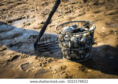 A clamming rake sits next to a clam bushel fill with freshly harvested Maine clams on the clam flats.