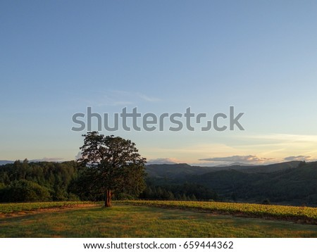 A clear blue sky with a low haze of of evening glow over distant hills. An Oregon vineyard glows along a line of hill in front of a dark background. #659444362