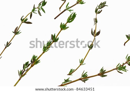 A close overhead view of thyme on a white background.