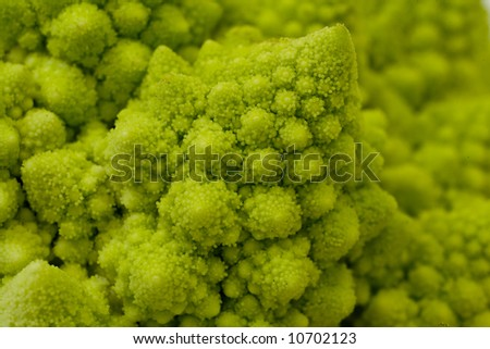 A close up image of the fractal pattern on a green cauliflower, aka Romanesco broccoli