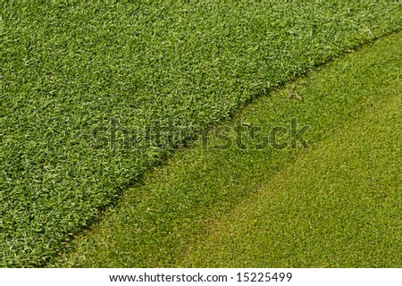 A close up image of turf grass on a golf course