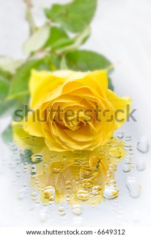 A close up of a beautiful yellow rose on a reflective background with water droplets.