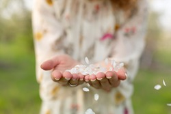 A close-up of a girl palm blows off a handful of white petals that fell from a flowering tree. Attractive young girl with flowers
