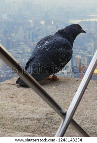 A Close Up of a Gray Pigeon Perched on the Empire State Building Overlooking the City on Hazy Day