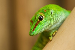 A close up of a green lizard
