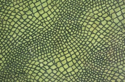A close up of a green skin of snake