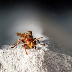 a close up of a hornet sitting on a white stone