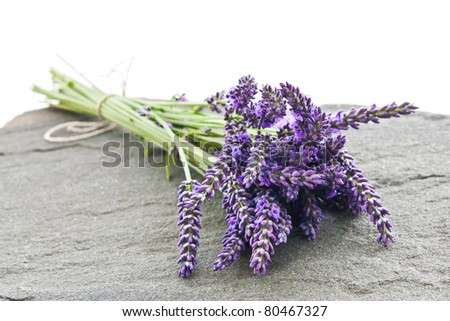 A close-up of a lavender on a shale stone