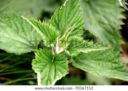 how to get rid of stinging nettle rash