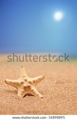 A close up of a sea star on a sandy beach against blue sky