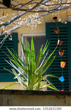 A close-up of a small palm tree peeking out from a wall in a backyard garden with colorful plastic cups and green window shades. #1352631185