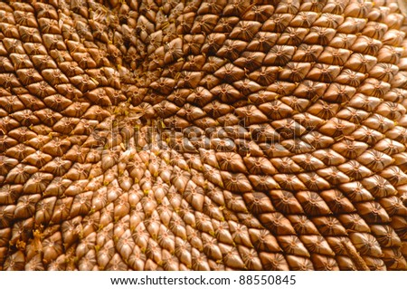 A close up of a sunflower with pattern of seeds