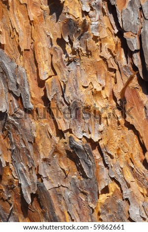 a close up of bark texture from a scots pine tree