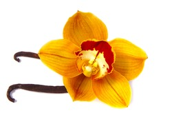 a close up of beautiful yellow orange with red lip brown orchid flower with delicious vanilla beans seed pods isolated on white