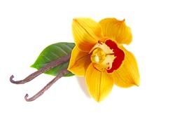 a close up of beautiful yellow orange with red lip brown orchid flower with delicious vanilla beans seed pods and green leaf isolated on white