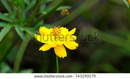 A close-up of bees and flowers #743290579