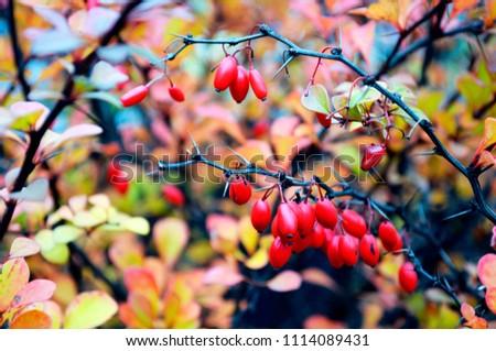 a close up of briar tree
