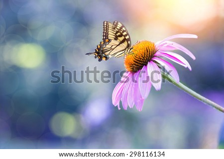 a close up of echinacea bloom with a butterfly on it