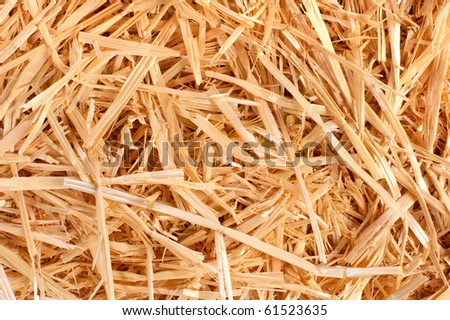A close up of harvested hay freshly cultivated for feed.