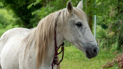 a close up of head of white horse