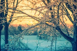 A close up of ice covered tree branches in the glow of the setting sun light after an ice storm.  Filtered for a retro, vintage look.