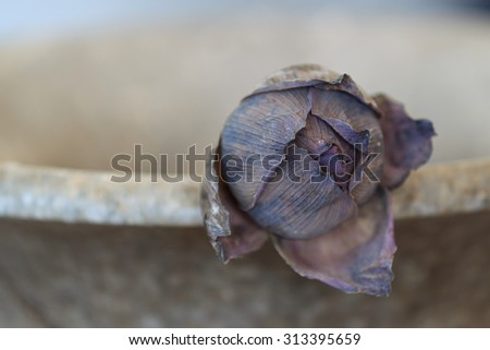 A close up of one dried lotus in an old pot